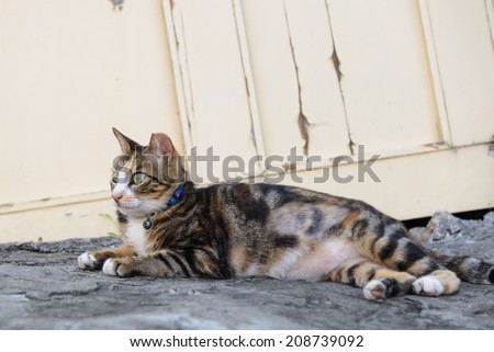 cat relaxing in the street - stock photo