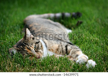 Cat Relaxing on Grass - stock photo