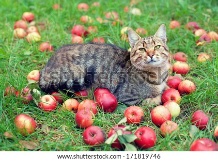 Cat relaxing on green grass among apples - stock photo