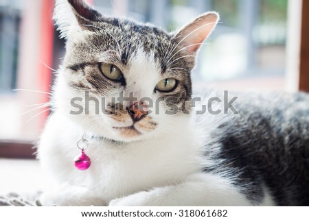 Cat relaxing on his side, stock photo