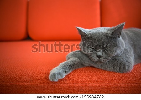 Cat relaxing on the couch. - stock photo