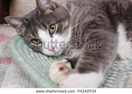 Cat resting - stock photo