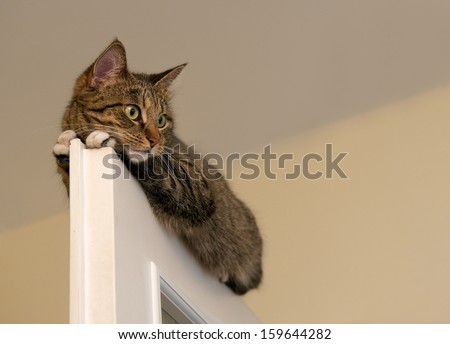 Cat, resting cat on the top of door in blur light background, cute funny cat close up, small sleepy lazy cat, domestic cat, relaxing cat, cat resting, lazy cat on day time, selective focus to the face - stock photo