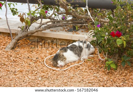 Cat resting in a garden - stock photo