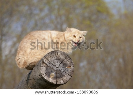 cat resting on top of a log - stock photo