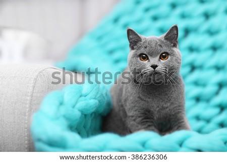 Cat resting on warm wicker plaid closeup - stock photo