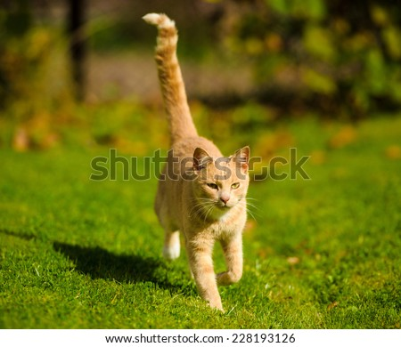 Cat running on green grass - stock photo