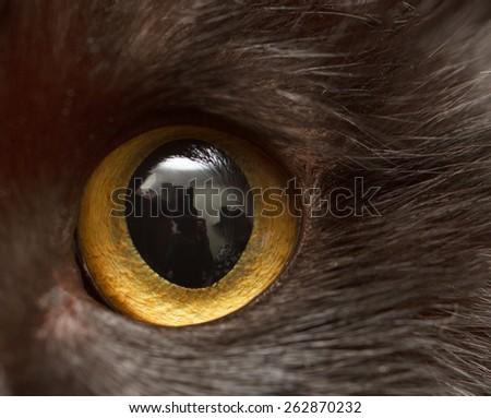 cat's eye - stock photo