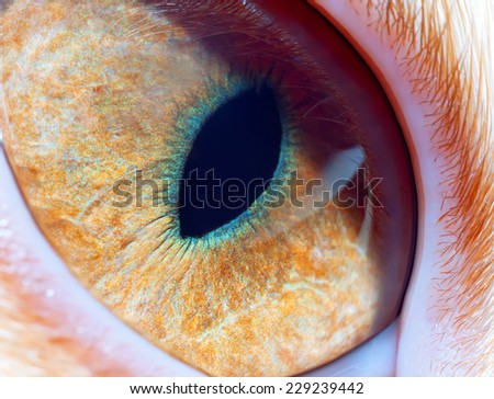cat's eye close up - stock photo