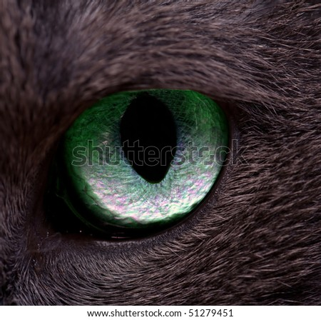 Cat's eye, macro, with clipping path - stock photo
