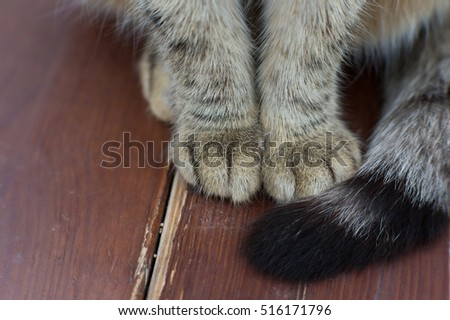 cat's paws in macro