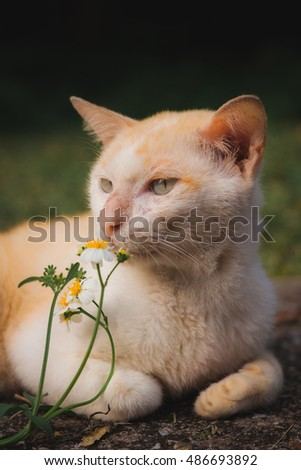 Cat's resting and smelling flowers.