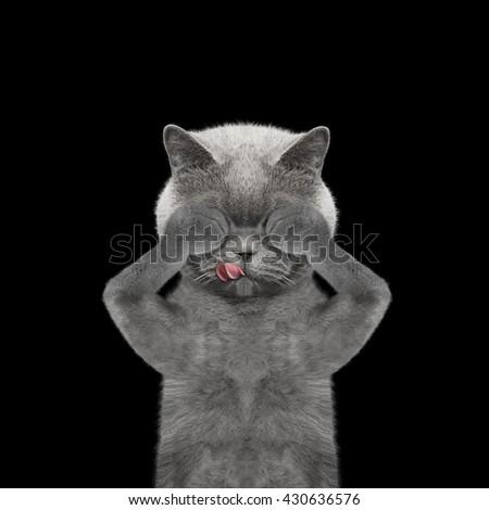cat sadness hide its eyes -- isolated on black - stock photo