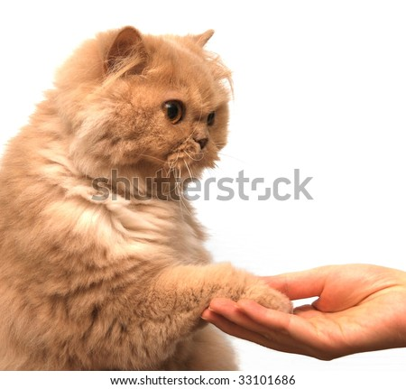 Cat shook hands with people