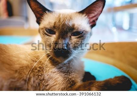 Cat sit on the wood floor - stock photo