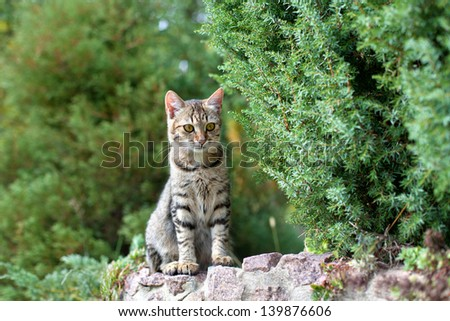 Cat siting on stone in the park - stock photo