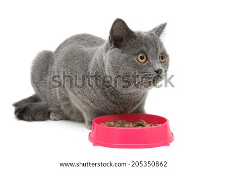 cat sits beside a bowl of food on white background close-up. horizontal photo. - stock photo
