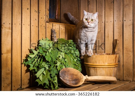Cat sits in sauna interior. Accessories and interior of Finnish sauna - stock photo