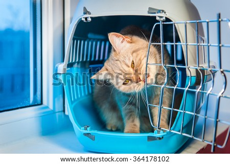stock photo young woman with scottish fold cat on brown