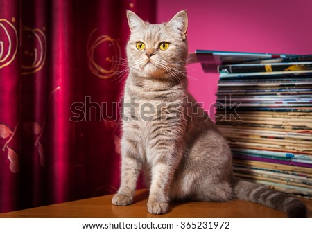 Cat sits on a table near stack of newspapers - stock photo