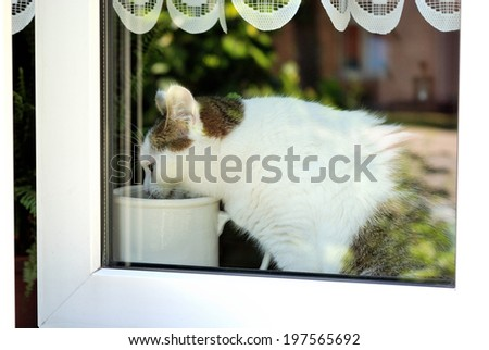 Cat sitting behind a window and drinking from a jar - stock photo