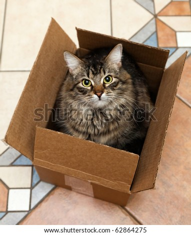 Cat sitting in a cardboard box - stock photo