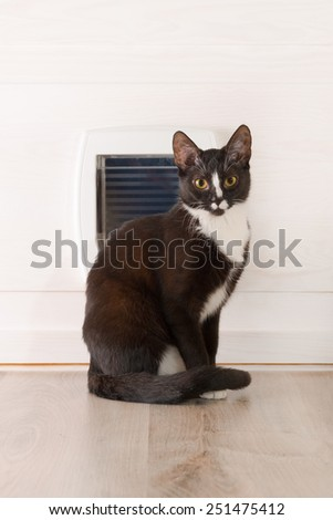 Cat sitting in front of the cat door at home - stock photo