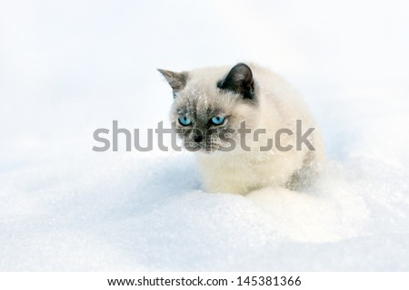 Cat sitting in snow