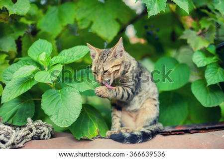 Cat sitting in the garden and licks paw - stock photo