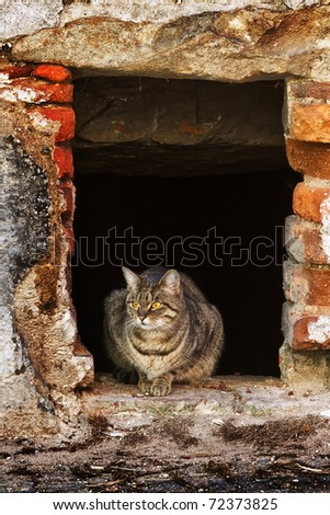 cat sitting in the window of the old ruined house - stock photo