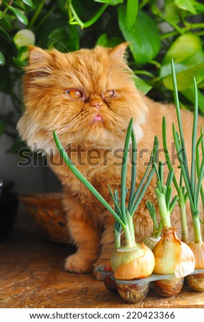 cat sitting near the window in front of green onions - stock photo