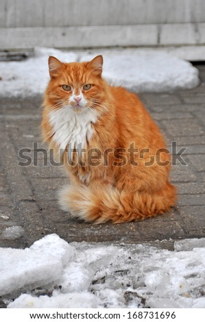 Cat sitting on snow and looks. - stock photo