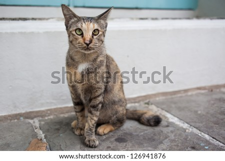 cat sitting on stone steps - stock photo