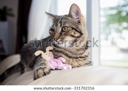 Cat sitting on the back of a couch with a bunny toy