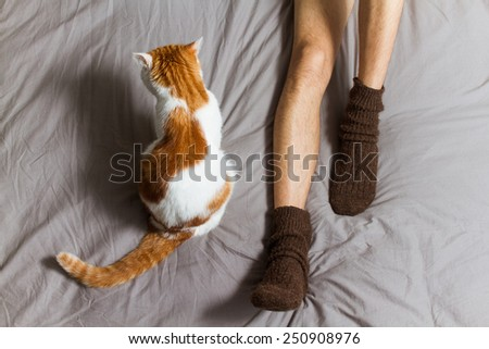 Cat sitting on the bed near male legs in socks. Turned away from camera. - stock photo