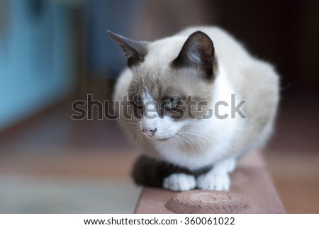cat sitting on the brick of house. - stock photo