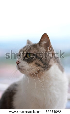 cat sitting on the edge of a terrace looking at the landscape