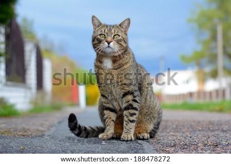 Cat sitting on the street - stock photo