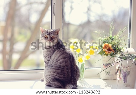 cat sitting on the windowsill in the flowers on the background of the window - stock photo