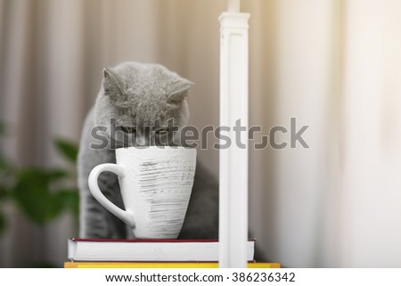 Cat sitting on wooden shelf with stack of books against blurred background