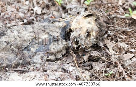 cat skeleton on the ground - stock photo