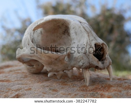 Cat skull - stock photo