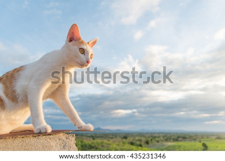 cat sky - cat on the roof - cat on the mountain - looking - stock photo