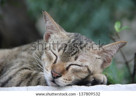 cat sleep - stock photo