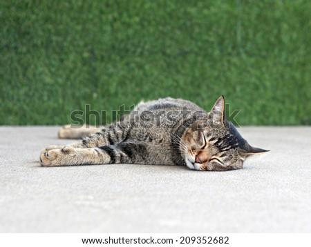 cat sleeping  - stock photo
