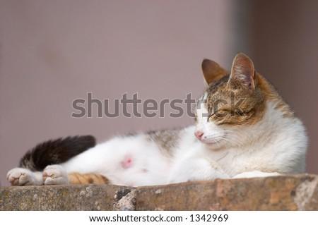 Cat sleeping and enjoying the sunshine - stock photo