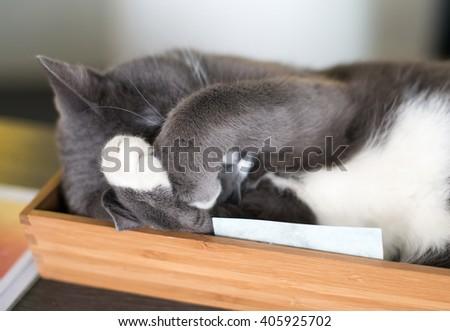 Cat sleeping at home. - stock photo