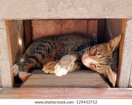 Cat sleeping in a brown wooden box. - stock photo