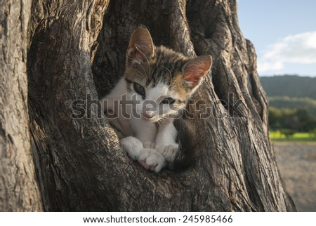 Cat sleeping in a tree of Costa Rica