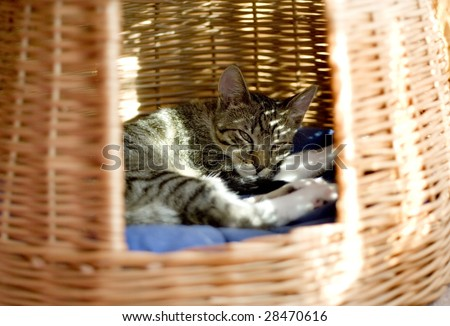 Cat sleeping in his house - stock photo